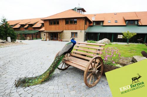 Foto - Accommodation in Horní Chrášťany - Ekofarma Horní Chrášťany